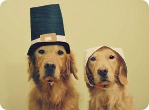 pooch thanksgiving